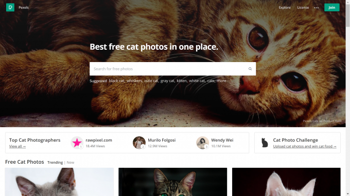 Free Cat Photos|Pexels