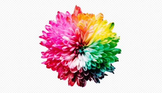 SVG画像も圧縮し軽量化できるオンラインツール『Recompressor』